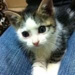 kitten4-254x3001