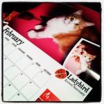 Gordie is a calendar boy