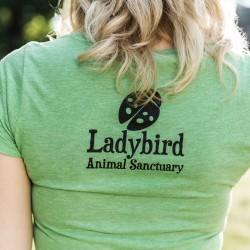 RW_ladybirds_4420