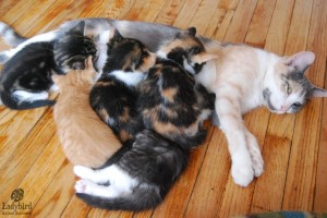 Lovey and her 6 kittens