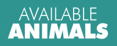 button_availableanimals
