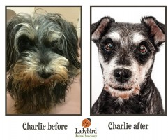Charlie before and after