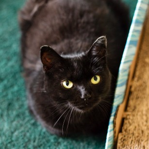 Tulip-photo by happytailspetphotography.ca