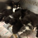 Mom and kittens at HAC