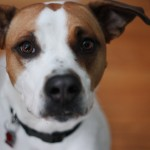 Dogs of Hamilton