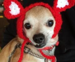 Pet hat