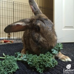 Easter eating