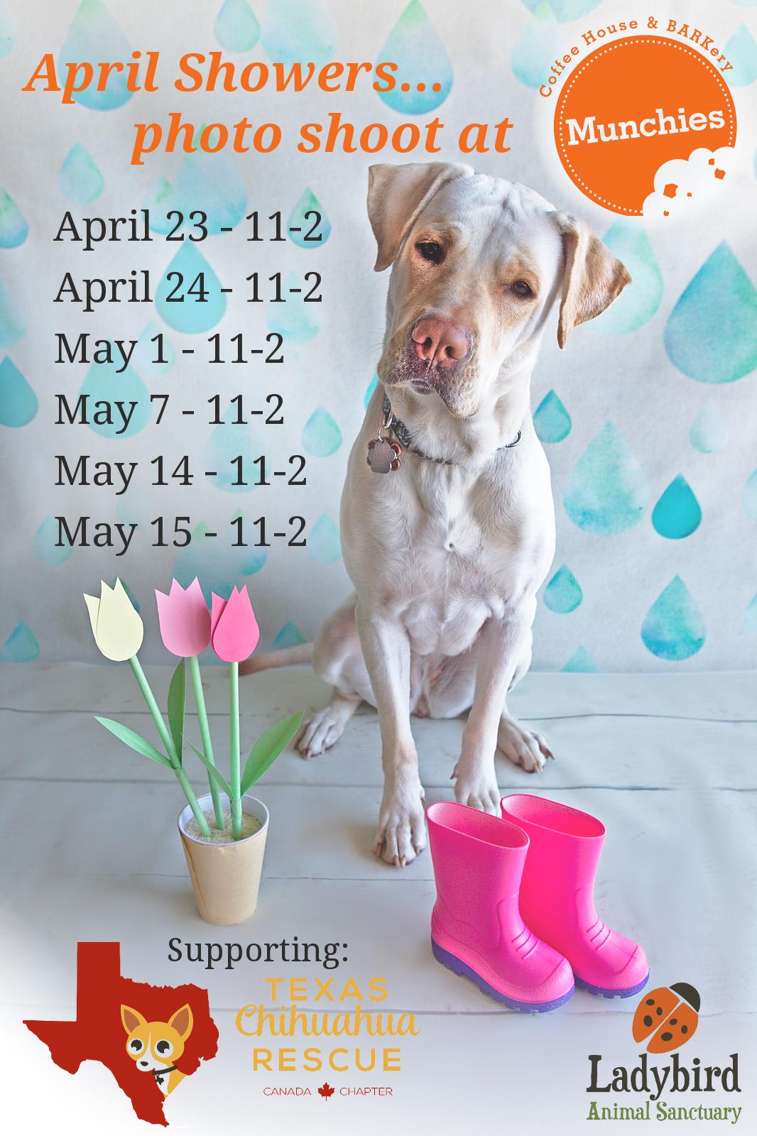 Ladybird Animal Sanctuary | Ladybird Animal Sanctuary - April & May