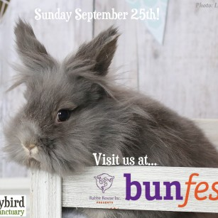 Bunfest 2016