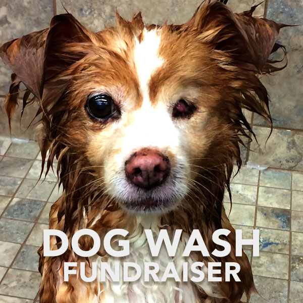 FeatureImage-DogWash