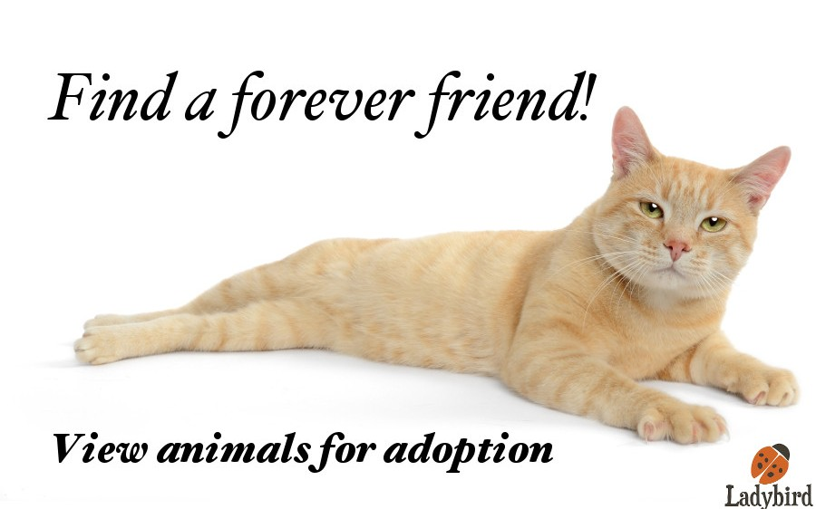 Find a forever friend!