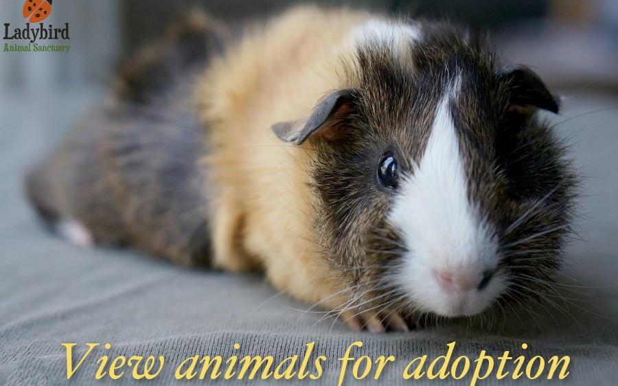 View animals for adoption