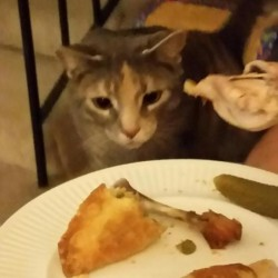 Juniper wants dinner