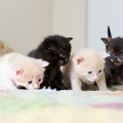 Juniper kittens 3 weeks old - photo by Willow Bean Photography