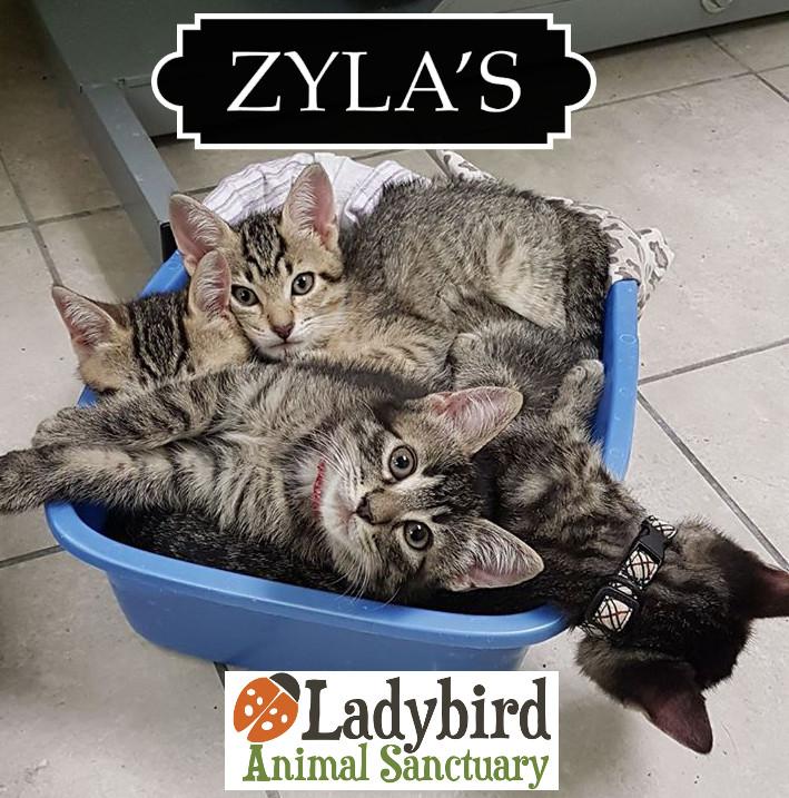 Zyla's CatFest