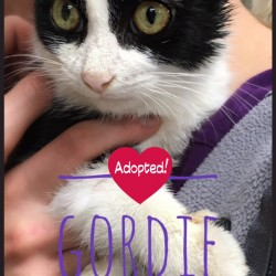 Downie adopted