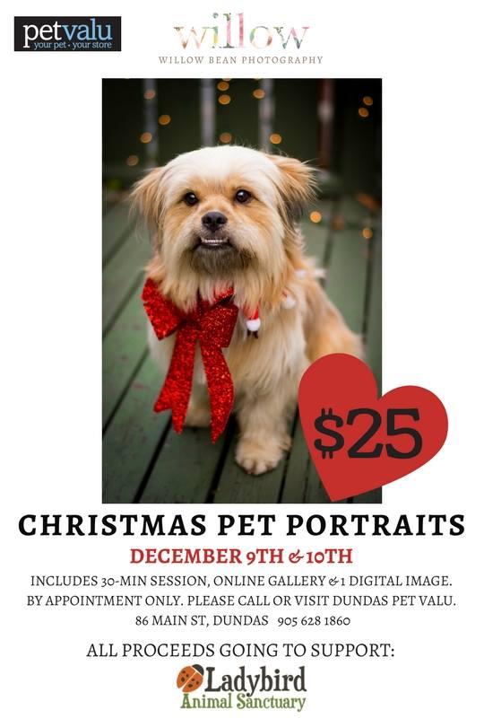 2017 Holiday pet portraits