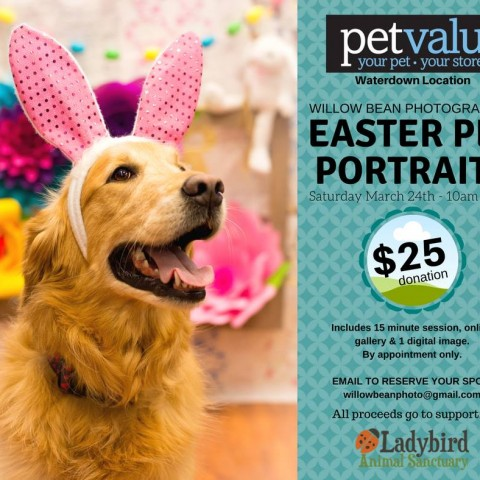 Easter Pet Portraits 2018