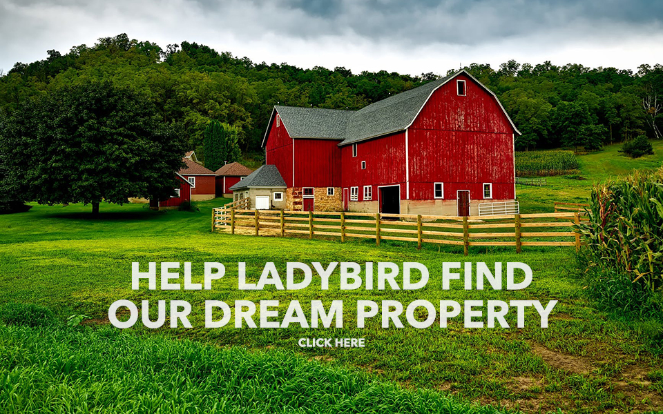 Ladybird Animal Sanctuary | Ladybird Animal Sanctuary - Welcome
